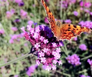 beauty, butterfly, and schmetterling image