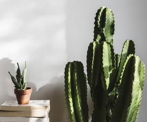 cactus, decor, and home image