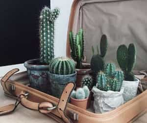 green and cactus image