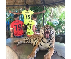 tigre, thailande, and maillot image