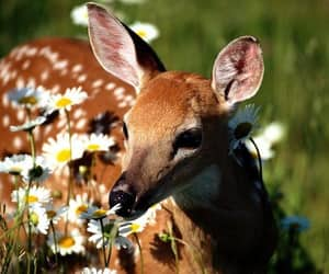 animals, deer, and forest image