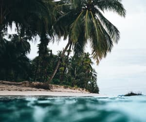 tropical, nature, and summer image
