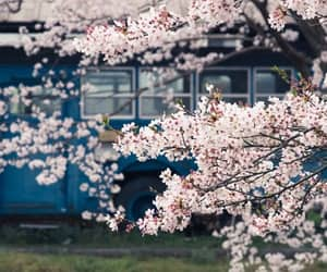 bloom, spring, and train image