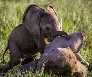 animals, elephants, and wildlife image