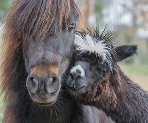 animals, horses, and llama image