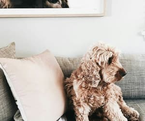 rose gold, animal, and cute image