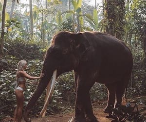 elephant, holiday, and jungle image