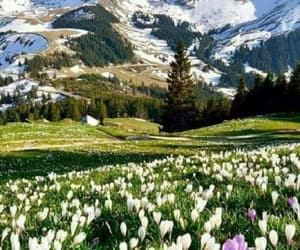 mountains, spring, and view image