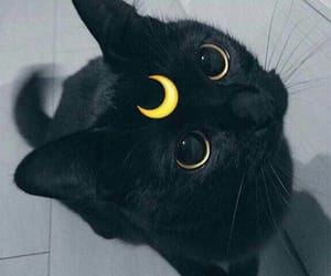 aesthetic, moon, and black image
