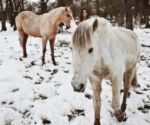 horses and winter image