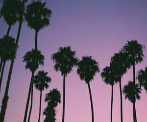 palms, purple, and sunset image