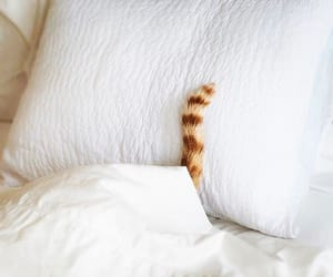 bed, Blanc, and cat image