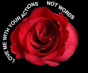 love, rose, and quotes image