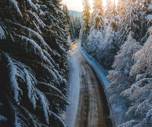 forest, travel, and road image