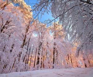 beautiful, nature, and sunlight image