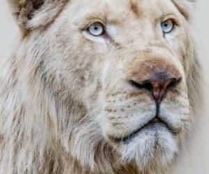 animal and lion image