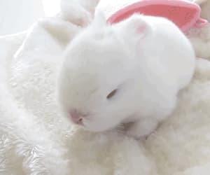 bunny, easter, and gif image