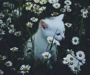 animal, flowers, and cat image