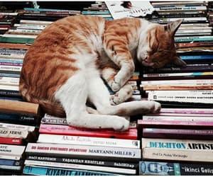 animals, beatiful, and book image