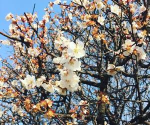 beautiful, blossom, and shanghai image