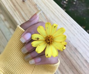 aesthetic, beautiful, and flower image