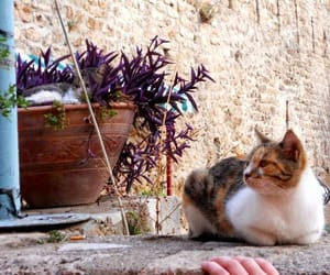 cat, turkishfood, and antalya image