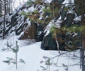 белый, снег, and елка image
