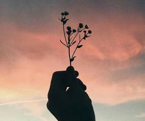 flowers, hand, and sunset image