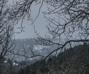 winter, grey, and landscape image