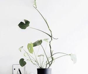 plants, green, and minimalism image
