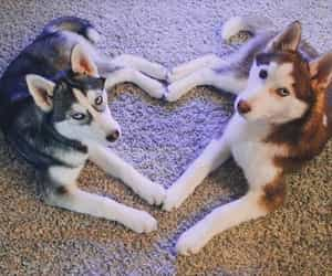 heart and dog image