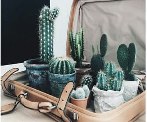 aesthetic, cactus, and green image