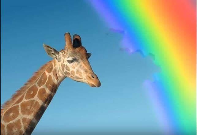 bite, giraffe, and 🌈 image