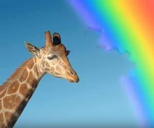 bite, giraffe, and rainbow image