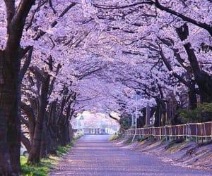 purple, nature, and tree image