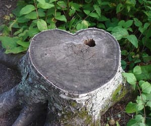 heart, tree, and nature image