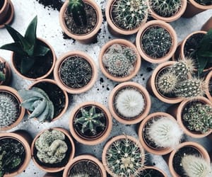 background, cactus, and achtergrond image