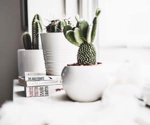 books, cactus, and decor image