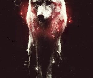 background, wallpaper, and wolf image