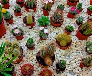 beautiful, cacti, and plants image