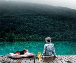 animals, lake, and dog image
