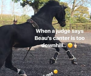 black, canter, and equestrian image