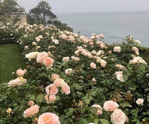 flower, nature, and ocean image