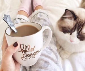 casual, cat, and coffee image