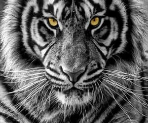 animals, beautiful, and black and white image