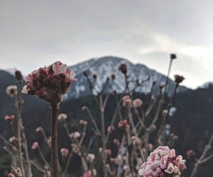 flowers, mountains, and photography image