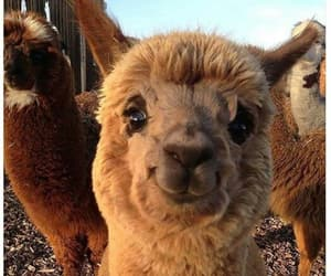 alpaca, baby, and day image