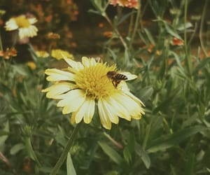 bee, colors, and edited image
