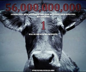 animal, cow, and good image