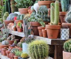 aesthetic, beautiful, and cacti image